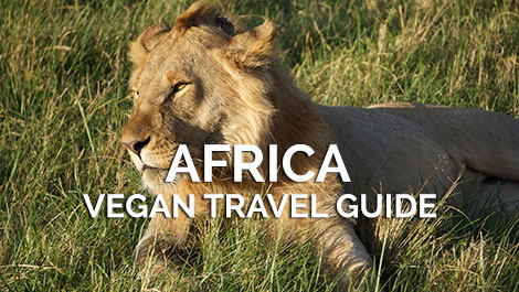 Africa Vegan Travel Guides
