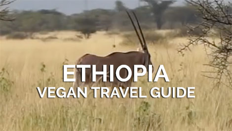 Ethiopia Vegan Travel Guide