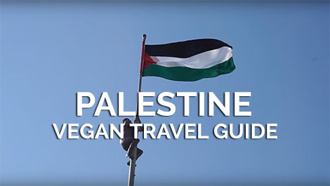 Palestine Vegan Travel Guide
