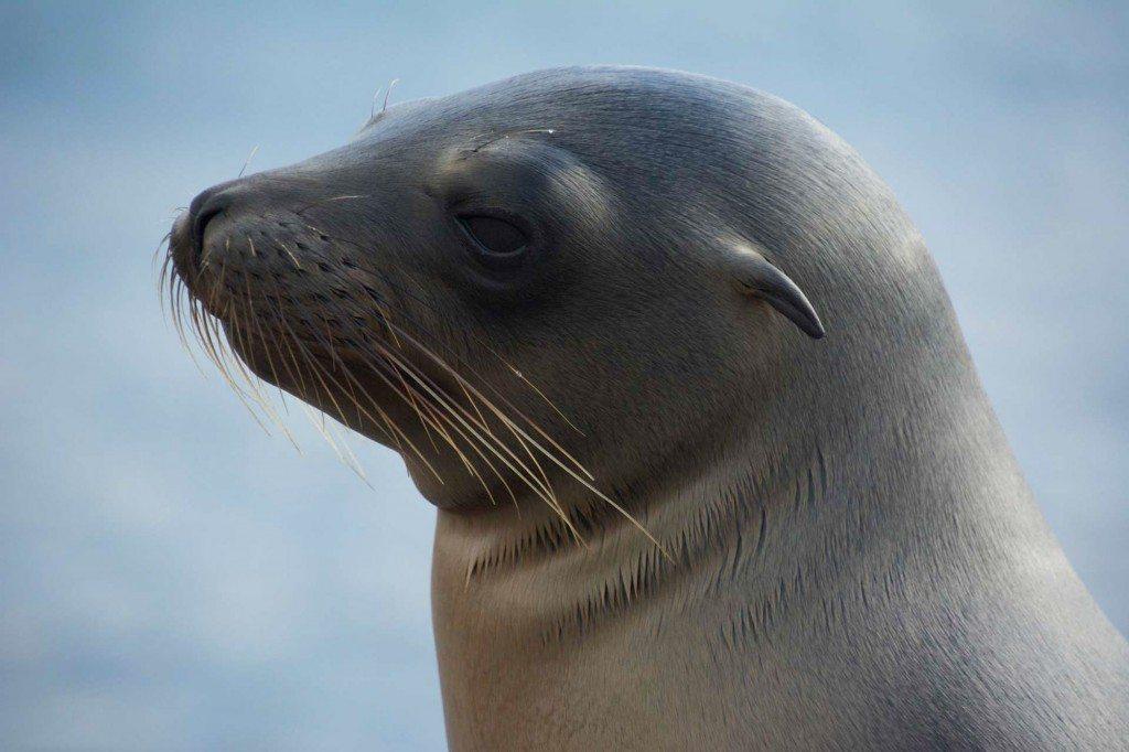 Seals on on Punta Espinoza