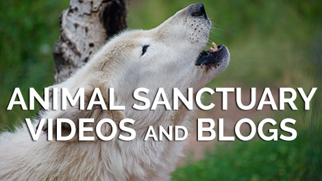 Animal Sanctuary Videos and Blogs