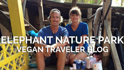 Vegan Traveler Blog - Elephant Nature Park