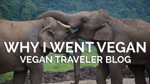 How Thailand Changed My Life…Why I went Vegan