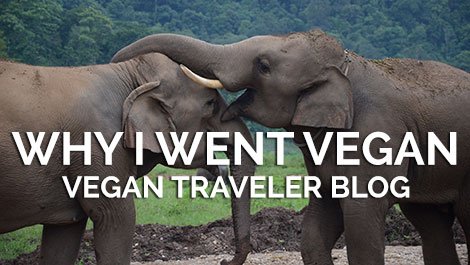 Vegan Traveler Blog - Why I went vegan