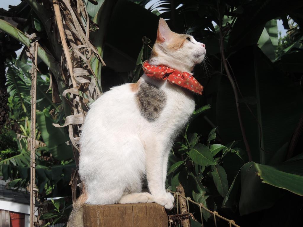 2016:06:02 Haiku Maui Hawaii Leilani Farm Animal Sanctuary VeganTravel Cat
