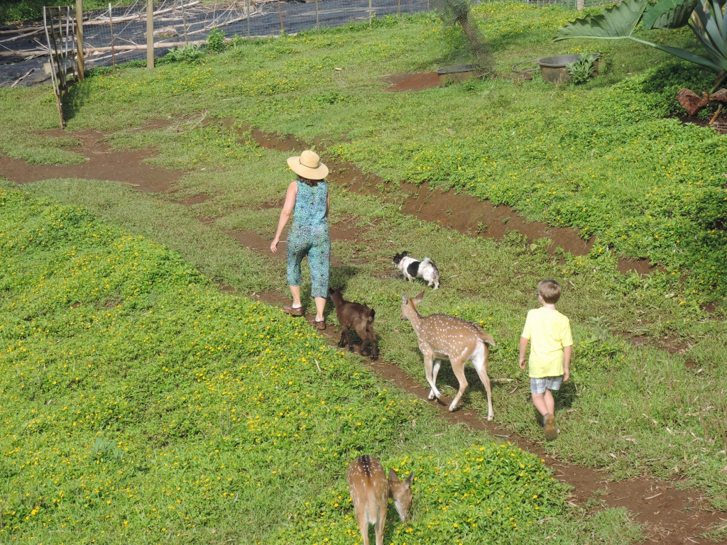 2016:06:02 Haiku Maui Hawaii Leilani Farm Animal Sanctuary VeganTravel Laurelee Goat Deer Dog