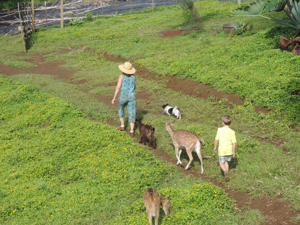 2016:06:02 Haiku Maui Hawaii Leilani Farm Animal Sanctuary VeganTravel Laurelee Goat Deer Dog