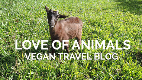 Vegan Traveler Blog - Leilani Farm Sanctuary - Michelle - Vegan Travel
