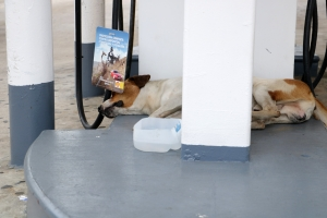 homeless dogs (1)
