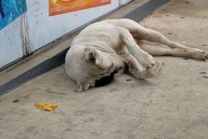 homeless dogs (3)