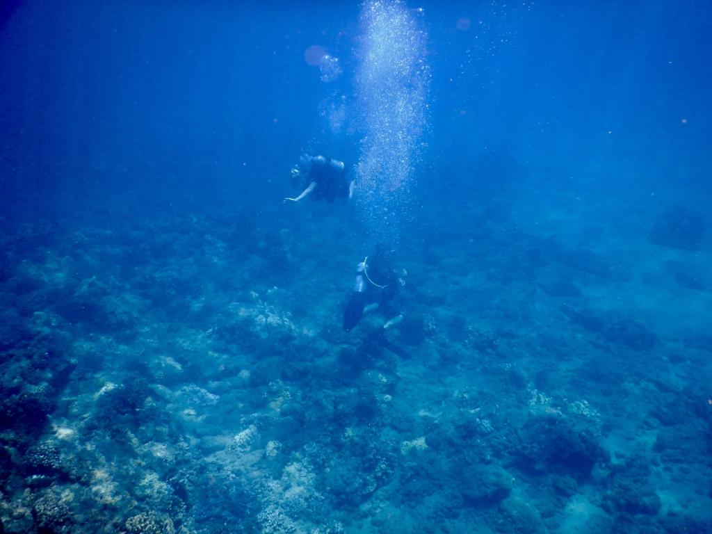 2016:05:29 Kaananpali Black Rock Beach Snorkeling Vegantravel Divers