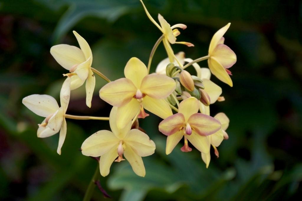 2016:06:01 Lanai Hawaii AMM VeganTravel Four Seasons Flowers