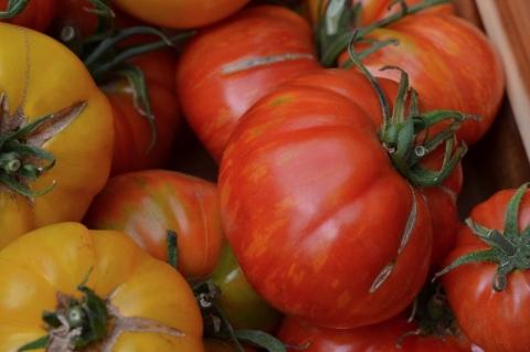 Portland Farmers Market – Portland State University