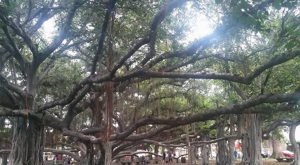 Banyan Tree Lahaina Vegantravel