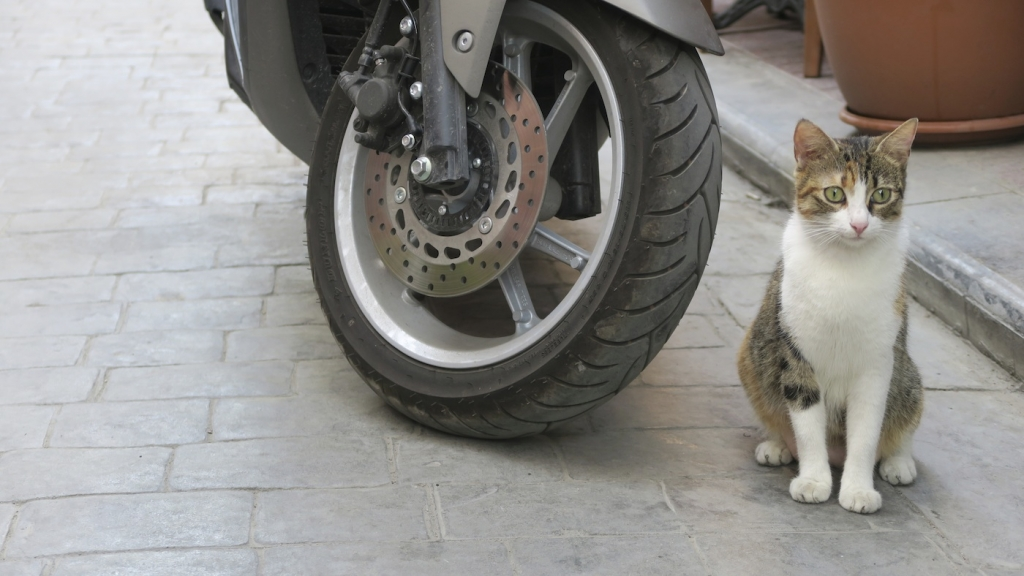 Istanbul_cat and bike