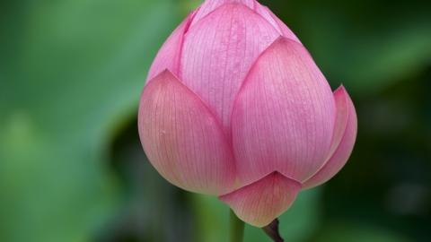 Japan Vegan Lotus – tour of Tokyo, Kanazawa, & Kyoto