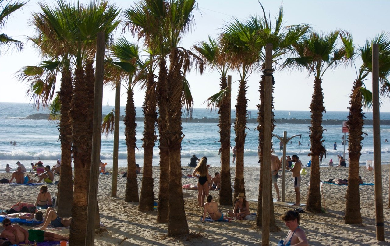 Tel Aviv Beach Palm Trees