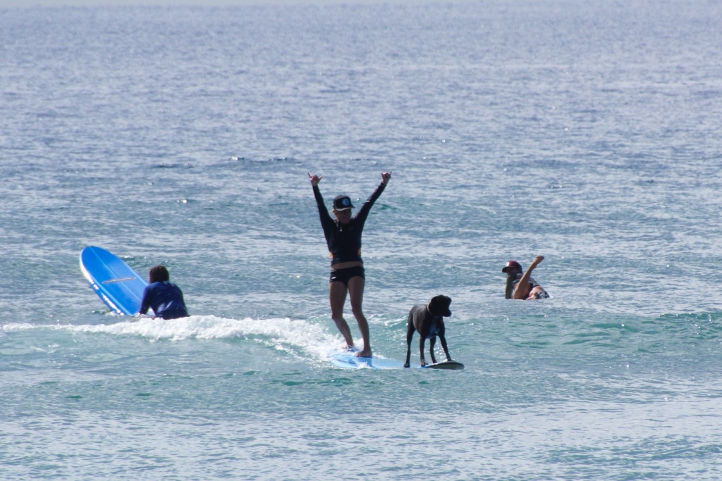Vegantravel Surfing Maui