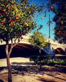 Orange trees in Valencia