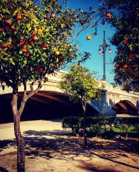 The city of oranges – Valencia
