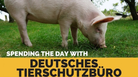 Spending the Day with Deutsches Tierschutzbüro