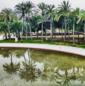 Palmtrees in the Turia Park in Valencia