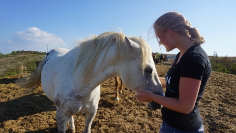 Our Visit to the Italian Horse Protection Association