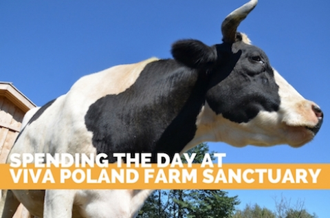 Viva Poland Farm Sanctuary
