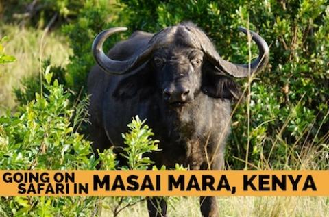 Going on Safari in Masai Mara