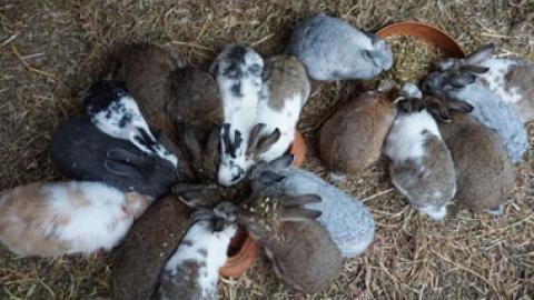 Back 2 Earth Animal Sanctuary and Raw Vegan Retreat
