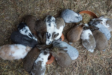 Back 2 Earth Animal Sanctuary and Raw Vegan Retreat - VeganTravel
