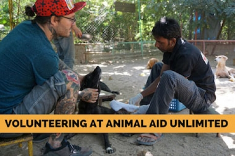 Volunteering at Animal Aid Unlimited