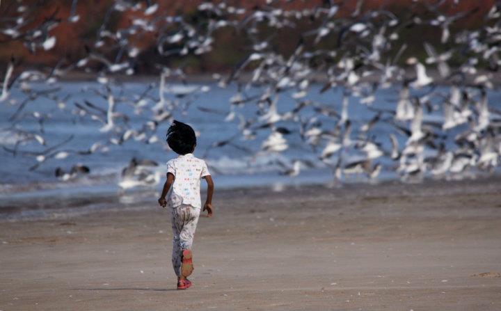 sea-gulls-4