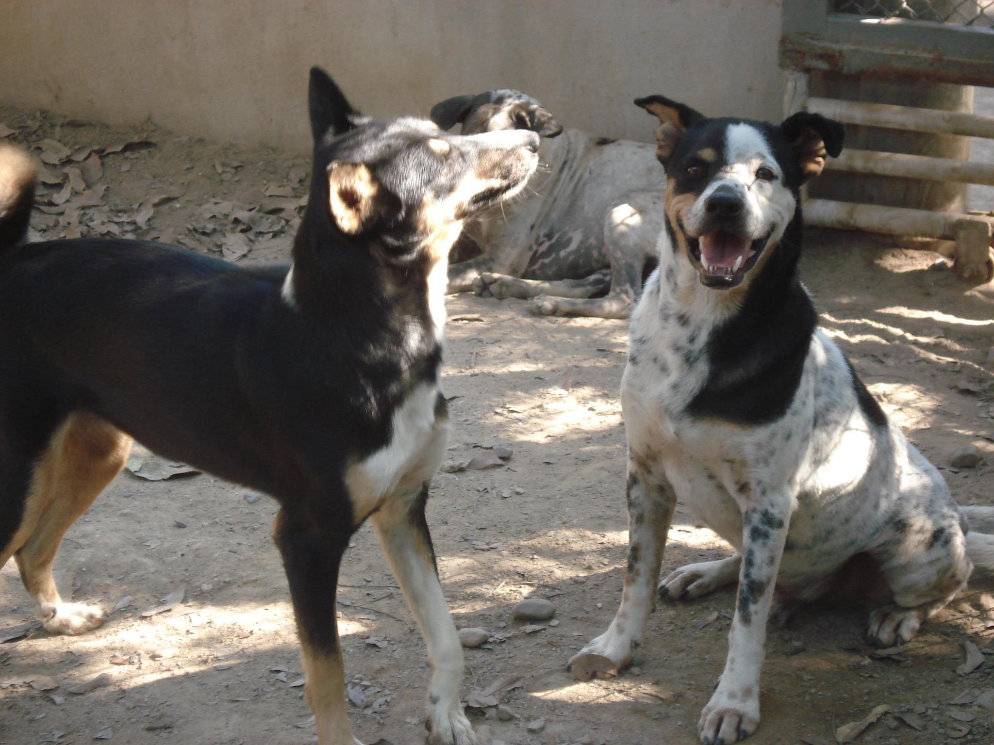 Santisook Dog and Cat Rescue Vegan Traveler Reviews - Vegan