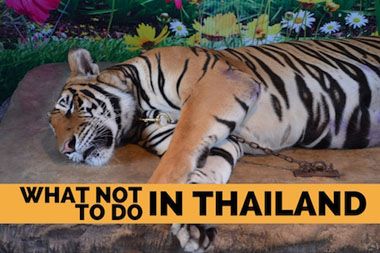 What Not to do in Thailand - VeganTravel