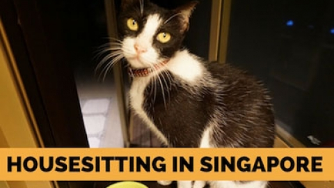 Housesitting in Singapore