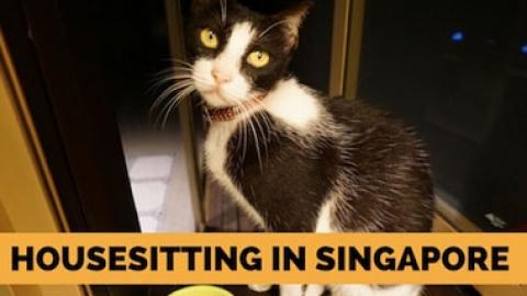 Housesitting in Singapore