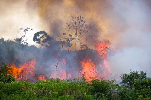 Amazon rainforest burning to open space for pasture.