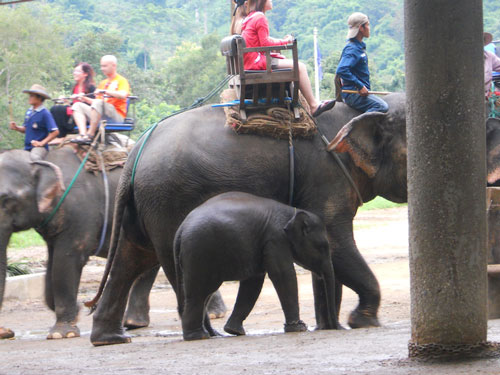 Tourists riding Elephants
