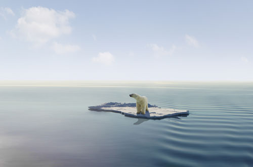 Polar Bear trapped on Iceberg