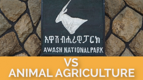 Awash National Park vs Animal Agriculture
