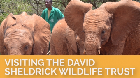 Visiting the David Sheldrick Wildlife Trust