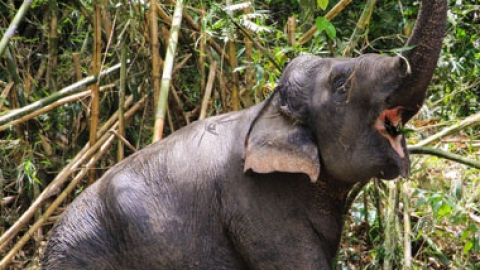 The First Ethical Elephant Sanctuary in Phuket
