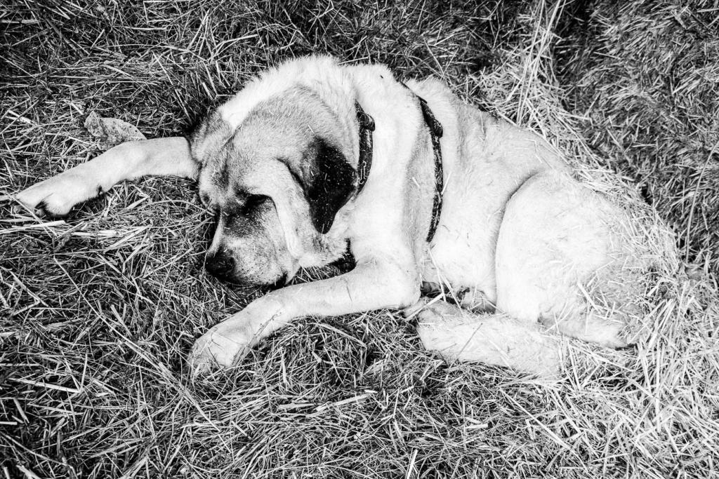 Paraiso del Burro, Spain - a dog