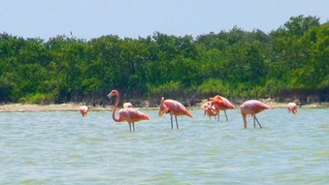 Las Coloradas, where water turns pink …if you are lucky