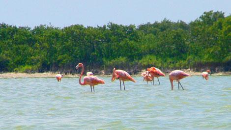 Flamingos at Las Coloradas