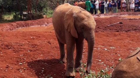 Safari, Sanctuary, and Sea:  My Week in Kenya Part I