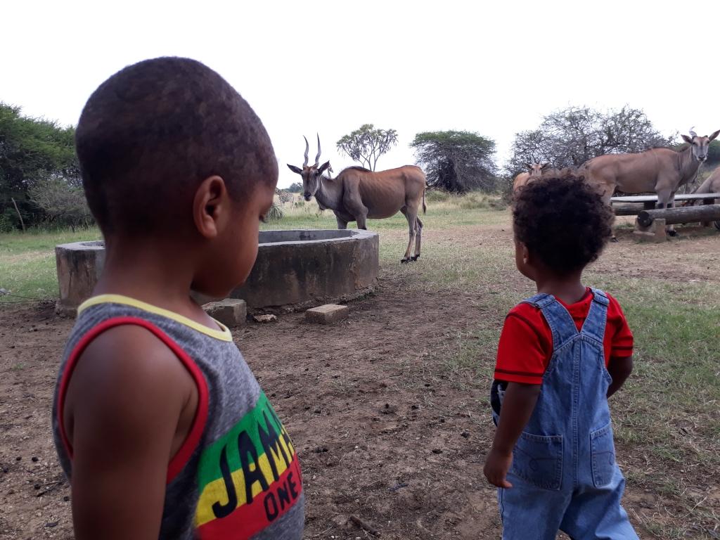 Vegan Travel Mombasa