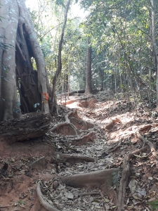 Path through jungle showing tree-root footholds