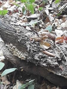 Lizard sits on a log